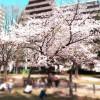 春ですね〜