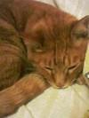 愛猫 アサリとウニ