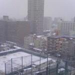 今日も雪。