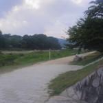 ぶらり加茂川。