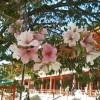 芸術の秋 で桜発見!