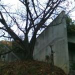石井修の住宅。
