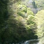 千早赤坂村へ