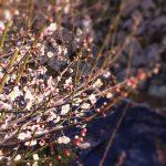 小春日和でございます。