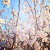 【ひとり言】年々春とか秋の期間が短くなっていませんか?